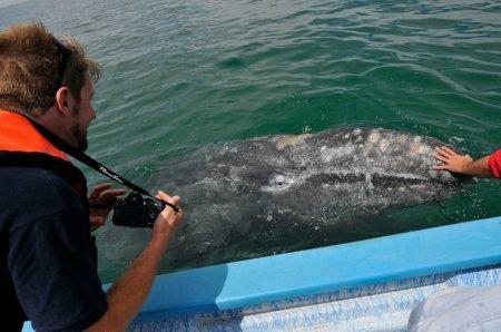 Whale watching для экстремалов (21 фото)