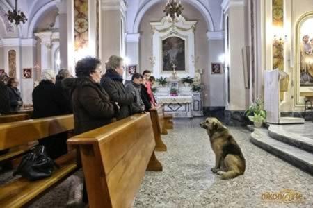 10 Самых удивительных случаев преданности собак