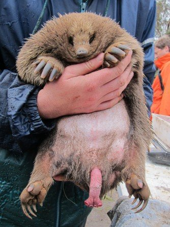 Топ-10: Странные гениталии мира животных