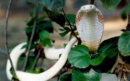 Топ 10: Редкие и красивые альбиносы