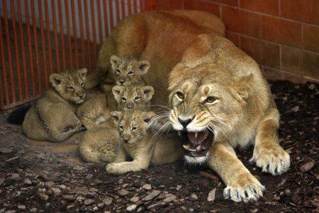 Позитив в фотографиях с животными (19 шт)