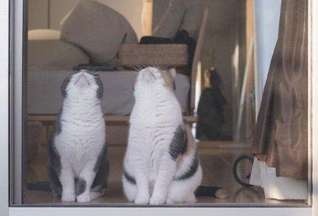 Синхронное кошачье наблюдение (5 фото)