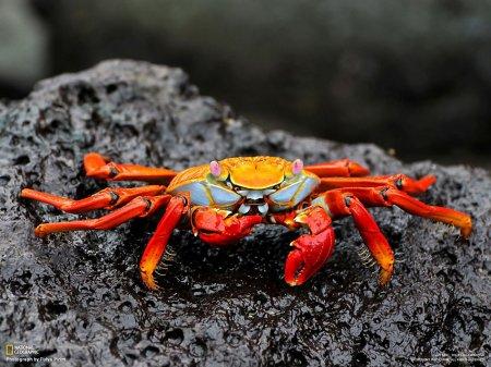 Лучшие фотографии животных за неделю от National Geographic (6 шт)
