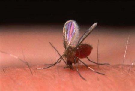 10 Поразительных заболеваний, передающихся человеку от животных
