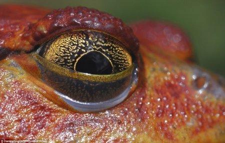 Глаза рептилий в объективе Дэниела Хойклина (8 фото)
