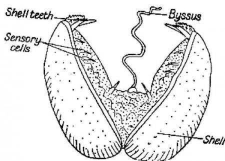 Топ 10: Макропаразиты