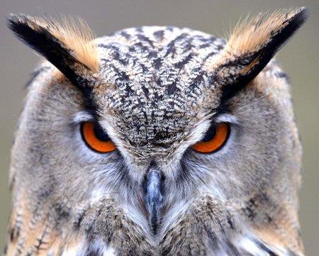 Животные мира в фотографиях (17 фото)