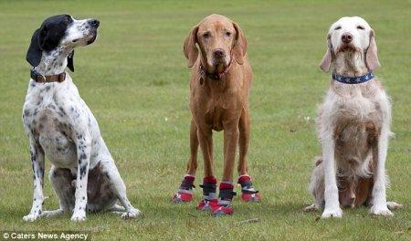 Красные сапожки для прогулки Милли (8 фото)