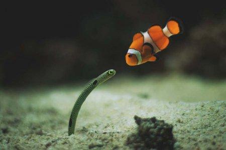Морские обитатели в фотографиях (29 шт)