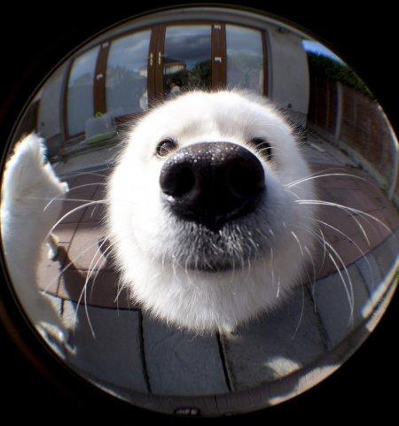 Позитив  в фотографиях с животными (24 шт)