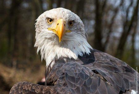 В парке хищных птиц Greifvogelpark (31 фото)