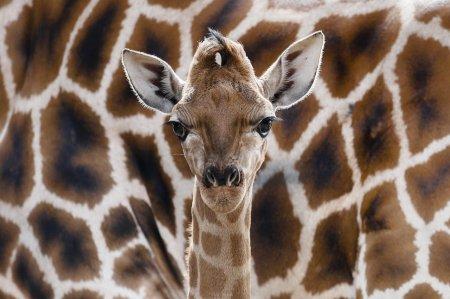 Животные планеты в фотографиях (17 шт)