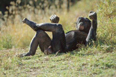 10 Животных, у которых встречается гомосексуализм