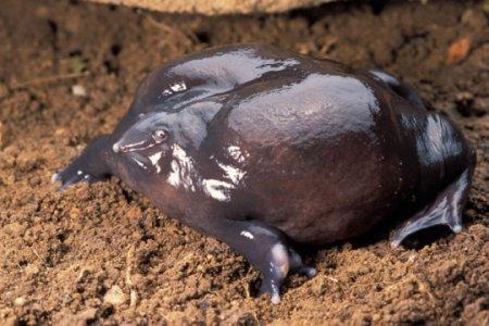 10 Жутких животных, которых обожает наука