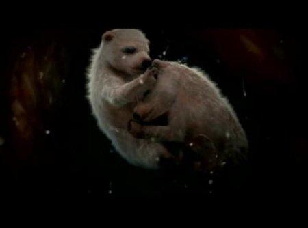 10 Невероятных фотографий животных в чреве матери