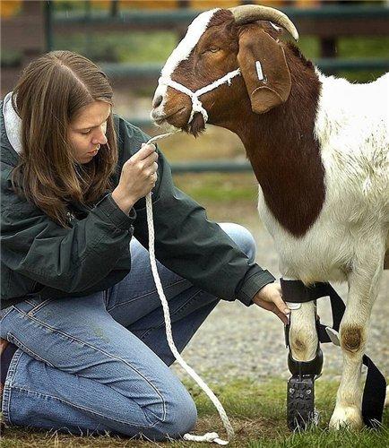 Животные с протезами (8 фото)