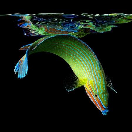 Подводные обитатели в фотографиях Марка Лаита (17 шт)