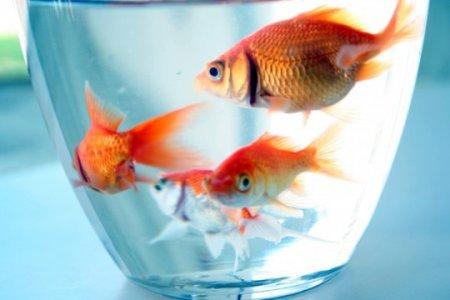 10 Экспериментов, демонстрирующих ум животных