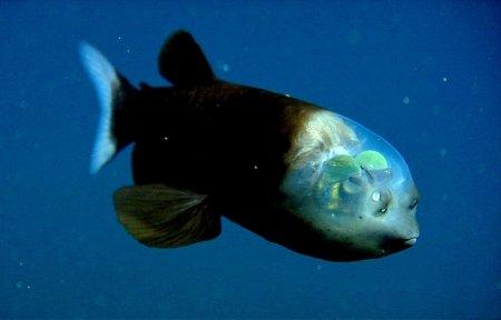 Самые впечатляющие прозрачные обитатели нашей планеты (10 фото)