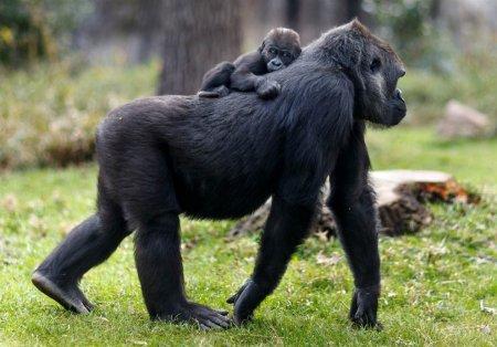 Детёныши, окружённые материнской заботой и любовью (23 фото)