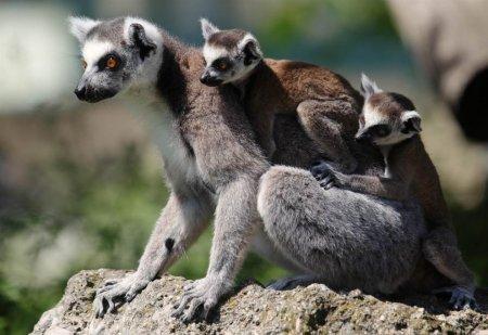 Животные планеты в фотографиях (24 шт)