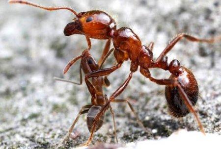 Самые удивительные насекомые (10 фото)