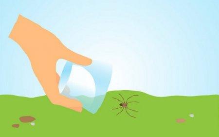 Топ-10: Мифы о пауках