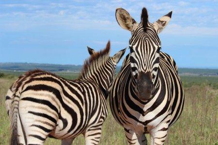 Фотографии животных, присланные на фотоконкурс National Geographic Traveler Photo (21 шт)
