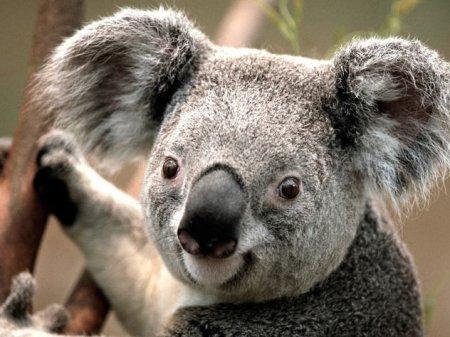 10 Абсолютно неверных фактов о животных