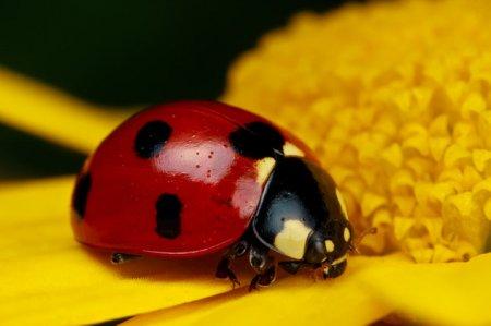 10 Фотографий миловидных насекомых