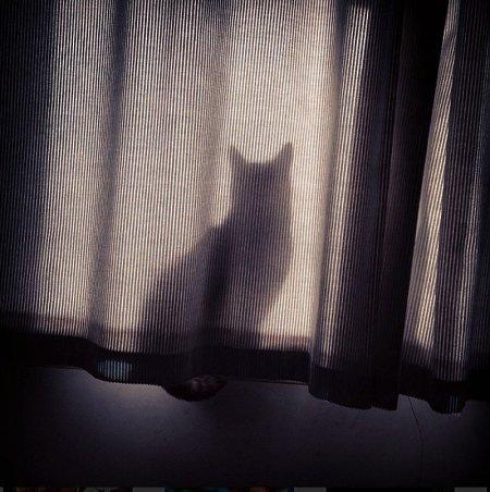 Котятки и прятки (39 фото)