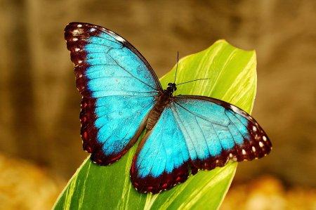Бабочки невероятной красоты (5 фото)