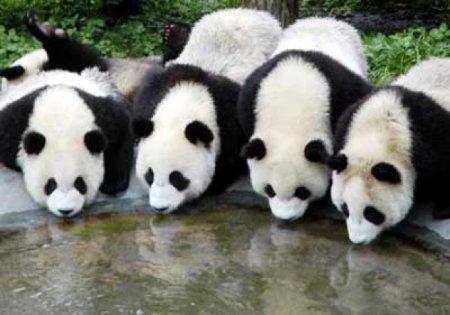 10 Странных фактов о животных