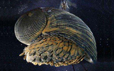 Редкие виды моллюсков, обитающих в глубинах океанов (10 фото)