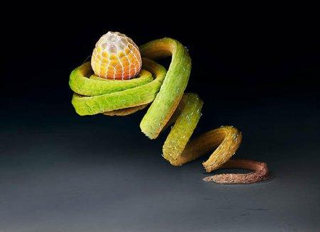 Макрофотографии яиц насекомых (9 шт)