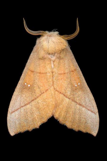 Ночные бабочки в объективе фотографа Джима де Ривьера (19 фото)