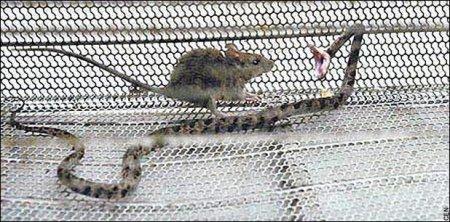 Топ-10: Шокирующе опасные животные