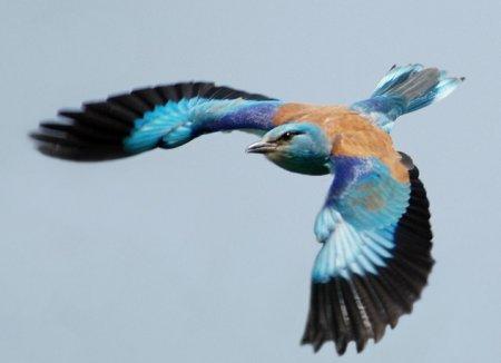 10 Странных экстремальных птиц, бьющих рекорды