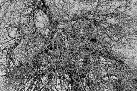 Совы – мастера маскировки (18 фото)
