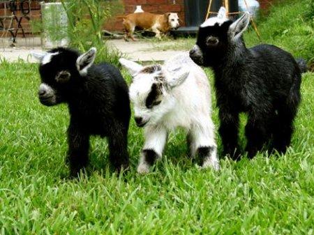 Топ-10: альтернативные домашние животные, которых стоит завести прямо сегодня