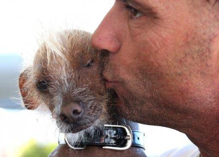 """Участники конкурса """"Самая уродливая собака в мире"""" (16 фото)"""