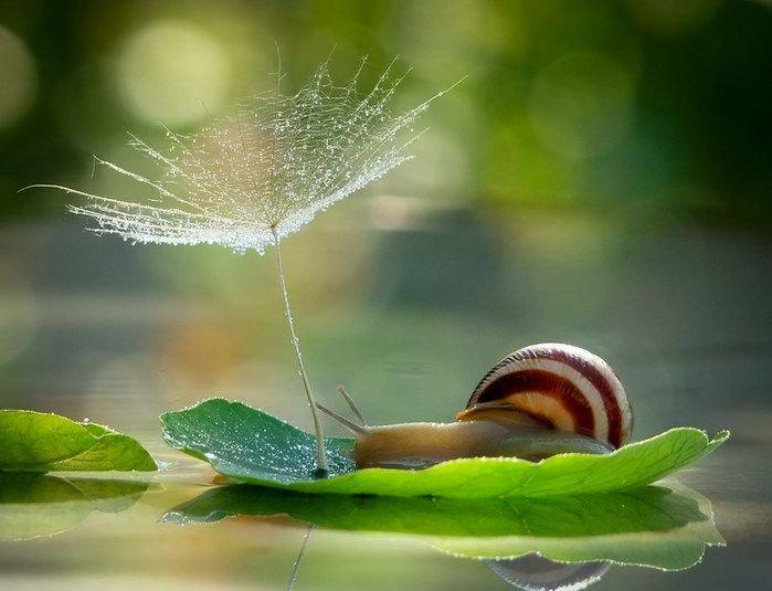 картинка живая природа