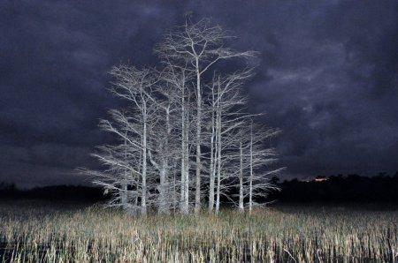 Работы-победители фотоконкурса Focus on Nature (41 фото)