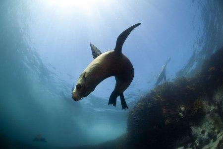 Капские морские котики через объектив Алистера Поллока (9 фото)
