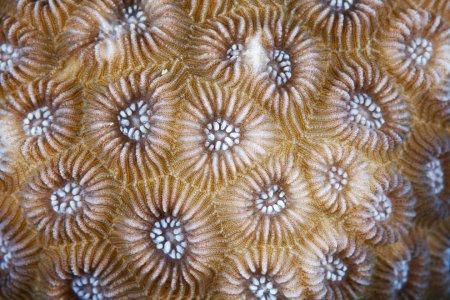 Кораллы в макрофотографиях Александра Семёнова (15 фото)