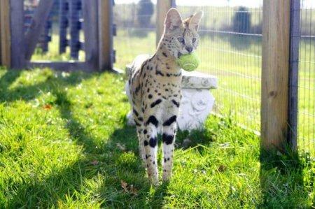 Позитивные фотографии животных (37 шт)