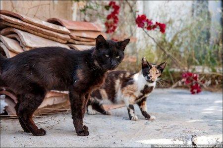 Коты с Кикладских островов (25 фото)