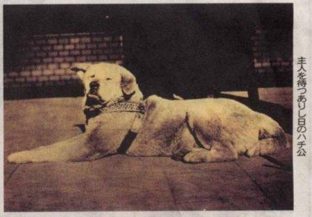 История Хатико – самого преданного в мире пса (7 фото)