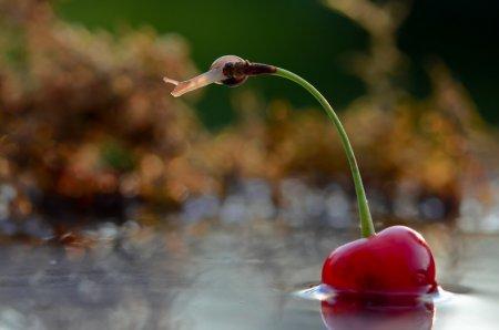 Живая природа в макрофотографиях Вячеслава Мищенко (26 фото)