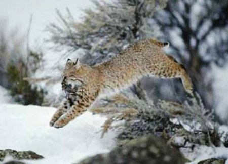 Животные на охоте (25 фото)